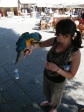 Me making friends with some macaw